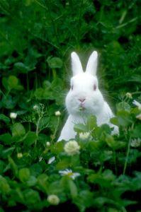 Come interpretare il linguaggio del corpo del vostro coniglio