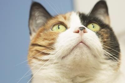 Come somministrare al gatto una medicina per via orale