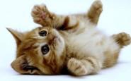Come si educa un cucciolo di gatto