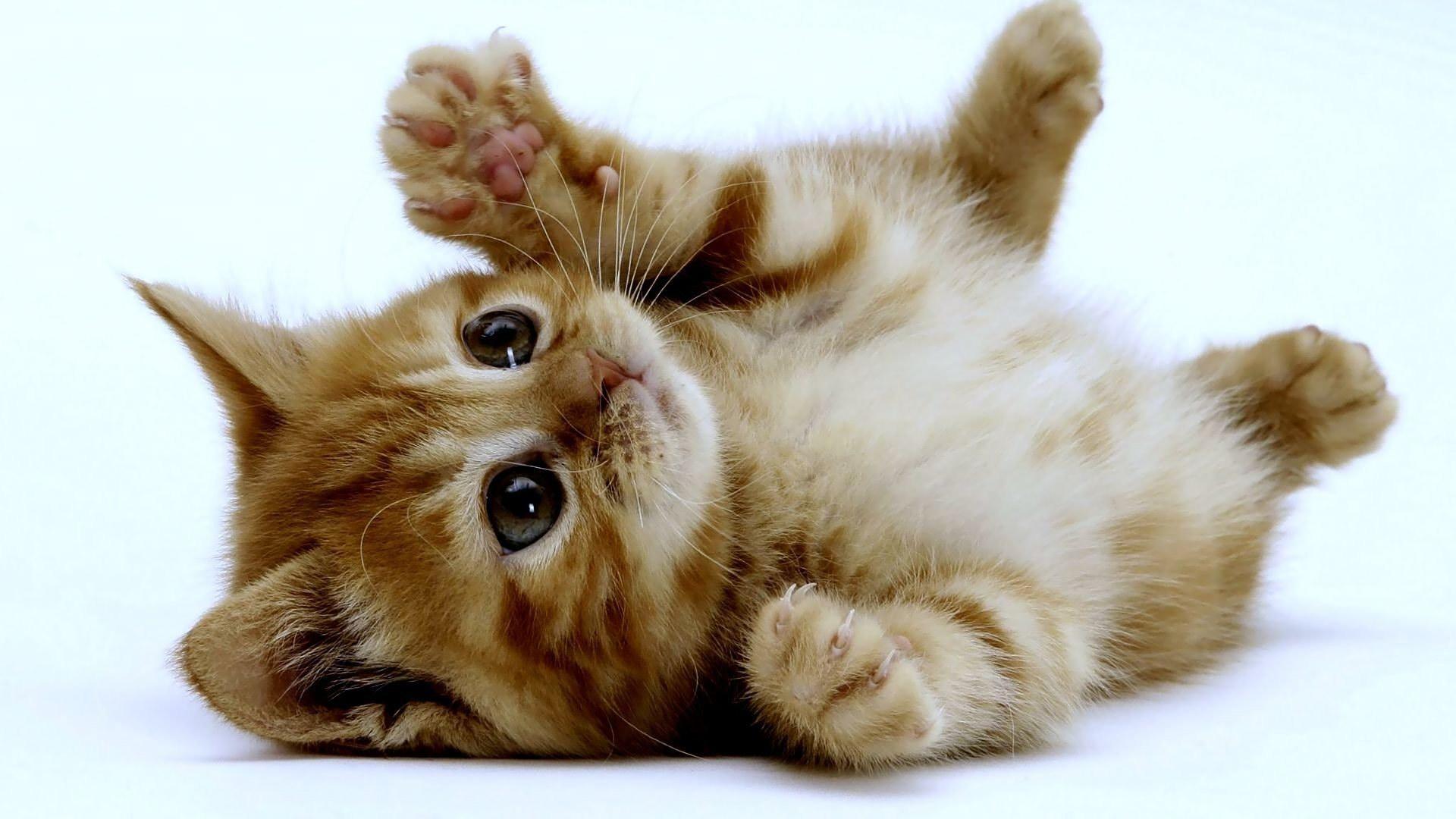 Amato Come si educa un cucciolo di gatto - Notizie.it WA39