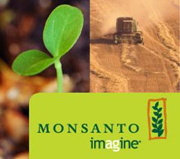 Monsanto e i suoi semi OGM, cosa c'è da sapere?