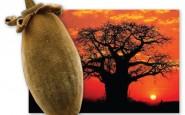 I benefici della bevanda al baobab
