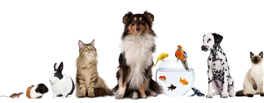 4 consigli per scegliere il proprio animale domestico