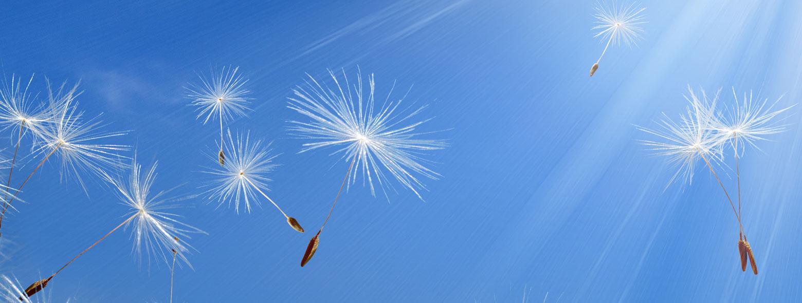 Quali antistaminici allergia pollini primavera
