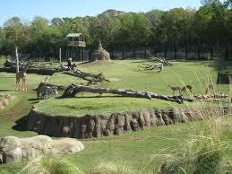 Quanti zoo ci sono in Italia