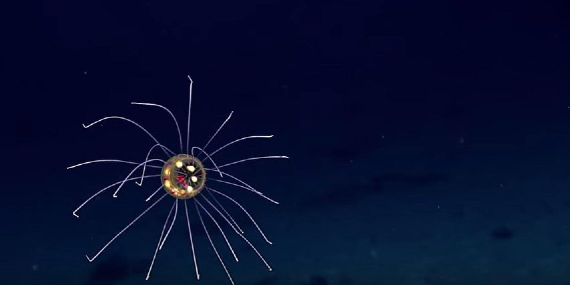 La fossa delle Marianne e la medusa aliena