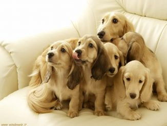 cani-dolcissimi