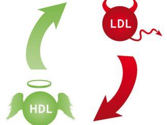 Il colesterolo cattivo (Ldl) e quello buono (Hdl)
