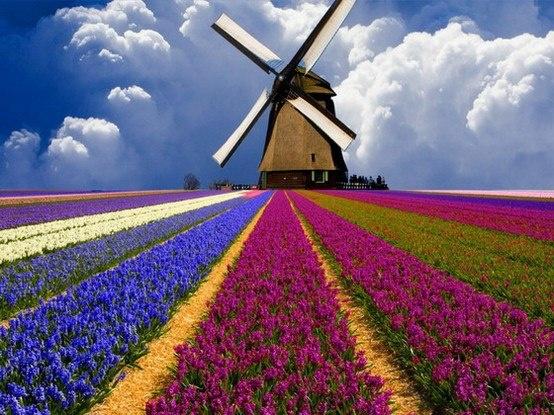 Uno dei tipici paesaggi della campagna olandese