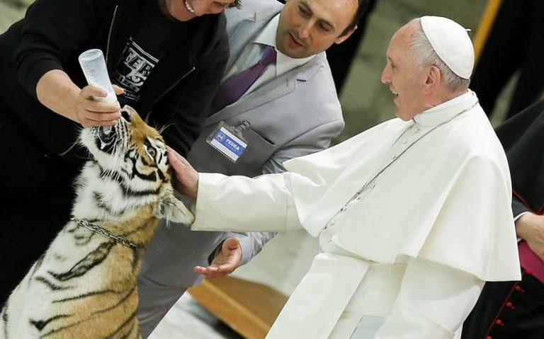 papa spaventa una tigre