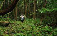 La vegetazione è molto fitta, e la foresta resta buia anche in pieno giorno.