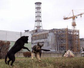 Cani randagi che giocano davanti alle rovine.