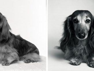 Amanda_Jones_Dog_Years_photography_book_then_and_now_03