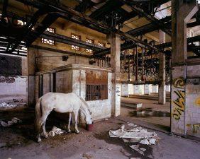 Una delle immagini più particolari che Jorion ha catturato. Un cavallo che viene nutrito nei resti di quella che sembra essere una fabbrica.
