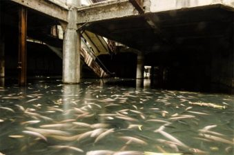 La pescheria è al piano terra.
