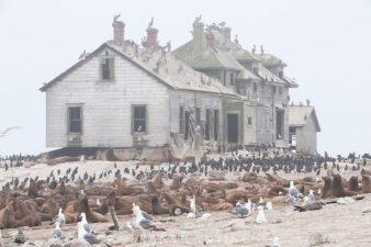 Una scena che ricorda gli uccelli di Hitchcock. E qualche foca.