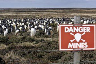 Chissà se ogni tanto salta in aria qualche pinguino.