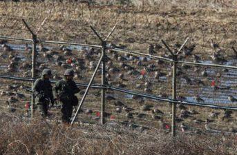 I soldati coreani fanno la guardia agli uccelli. No, non è vero. Ma a noi piace pensarlo così.