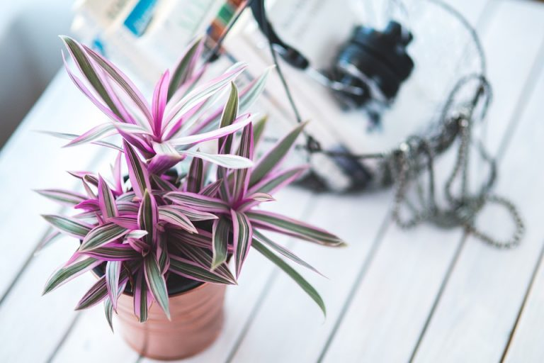 piante velenose appartamento