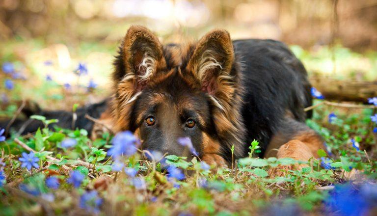 Come prevenire pericolo processionaria cane e gatti