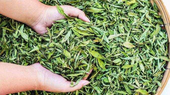 Come usare le foglie di stevia