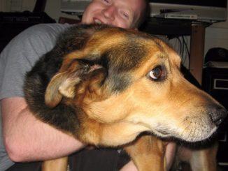 5 motivi per non abbracciare i cani
