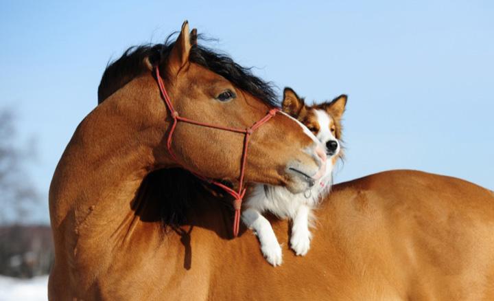 Biella: orgia con cani e cavalli