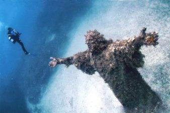 Le alghe gli danno un aspetto incredibilmente sofferente.
