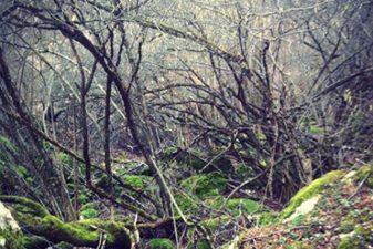Piante contorte e rami spogli hanno contribuito a fornire alla valle il soprannome di Valle del Diavolo.