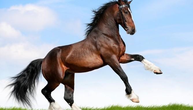 Inghilterra, 36 enne fa sesso con cavallo: la condanna: 100 metri di distanza da stalle