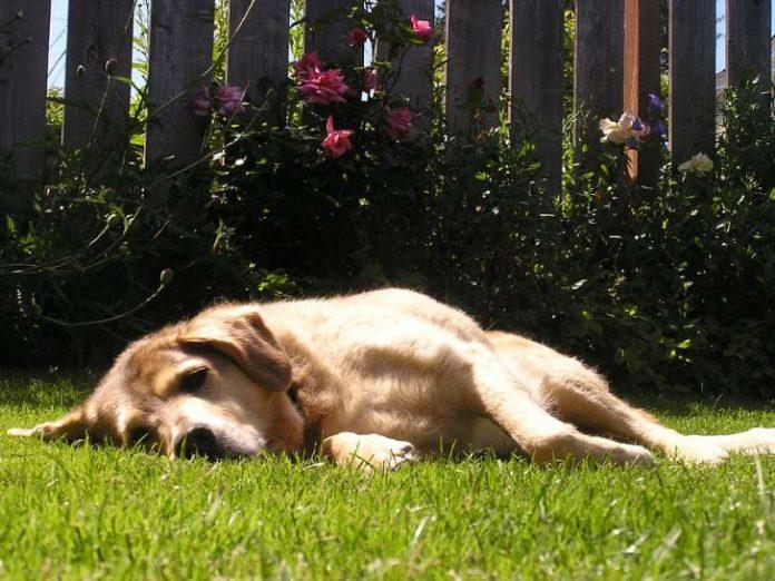 Lasciare solo il cane in giardino: multa fino a 2 mila euro