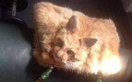 borsetta-di-gatto-morto
