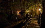 Sentiero illuminato nella notte a Discovery Island