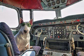 Cane sull'aereo