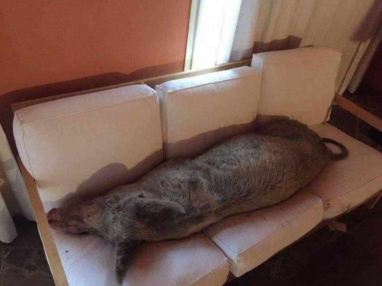 Il bel maialino addormentato sul divano - Video sesso sul divano ...