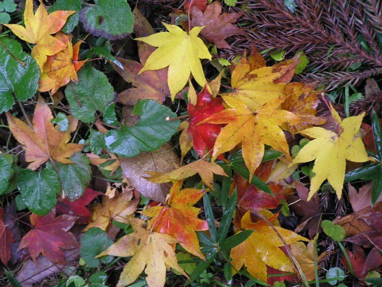 Centro tavola autunnale con foglie vere