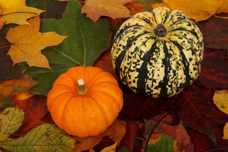 Halloween, tre decorazioni facili e graziose per le zucche