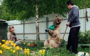 "Stepan ""aiuta"" ad annaffiare in giardino"
