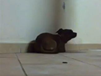 Nel video tortura il cane: presidio sotto casa a Pescia