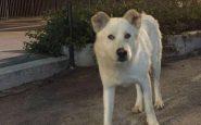 Sangineto: cane torturato e ucciso