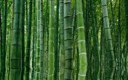 La foresta di Hei Zhy Gou in Cina