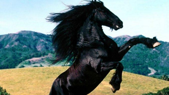 Furia cavallo del West