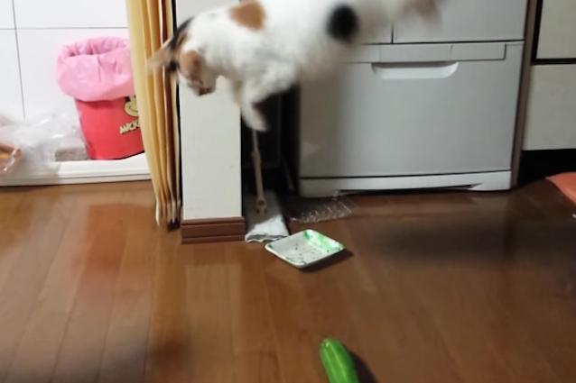Cetrioli: nemici numero uno dei gatti