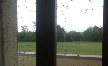 Sciame di cimici su una finestra