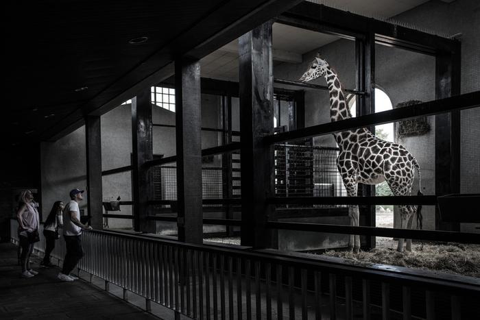 mostra zoo born free