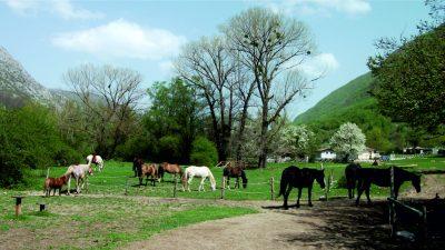 Cavalli nella natura