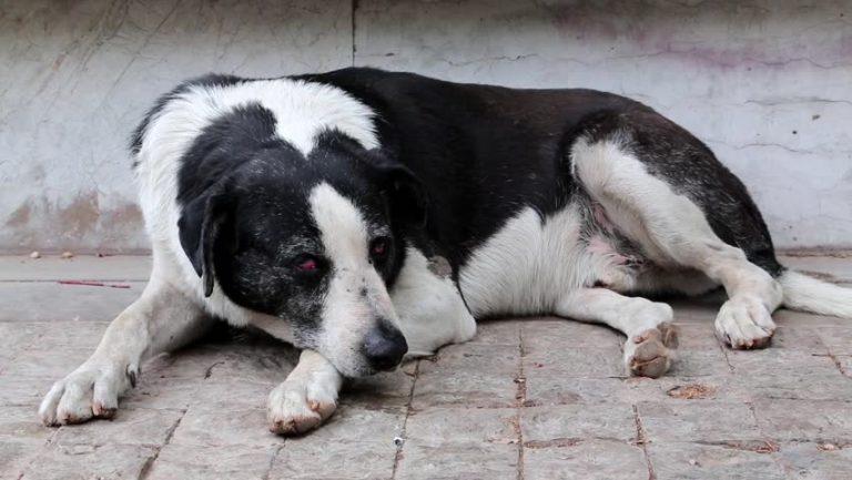 Decapita la cagnolina: non aveva soldi per il veterinario