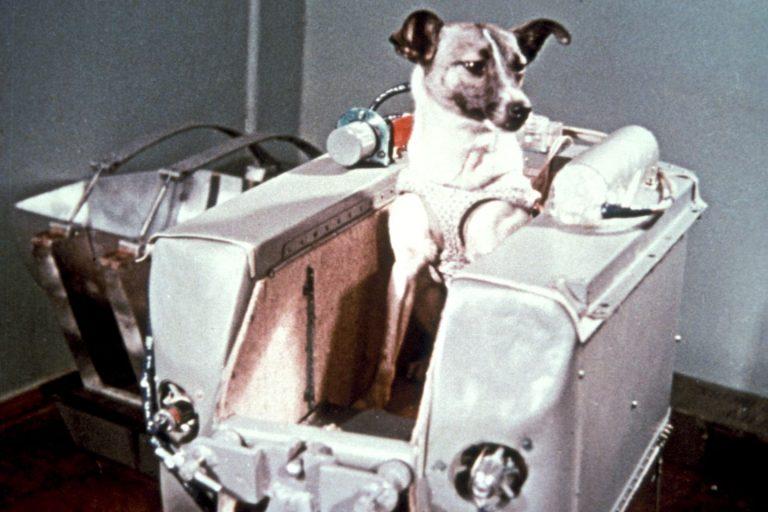 Laika, primo cane nello spazio 3 novembre 1957