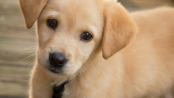 Roma: uccide cani del vicino con una pistola per un litigio