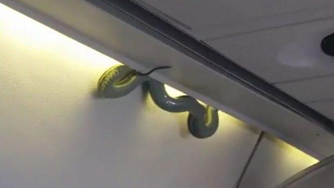 Aiuto c'è un serpente a bordo! Scatta l'atterraggio d'emergenza